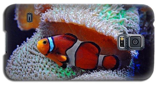 Galaxy S5 Case featuring the photograph Clown Fish by Savannah Gibbs