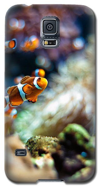 Clownfish  Galaxy S5 Case