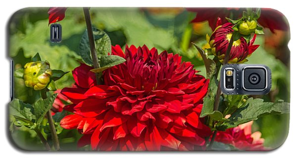 Cluster Of Dahlias Galaxy S5 Case by Jane Luxton