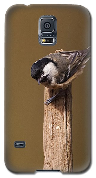 Galaxy S5 Case featuring the photograph Coal Tit by Paul Scoullar