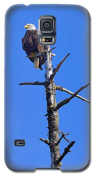 Coastal Bald Eagle Galaxy S5 Case