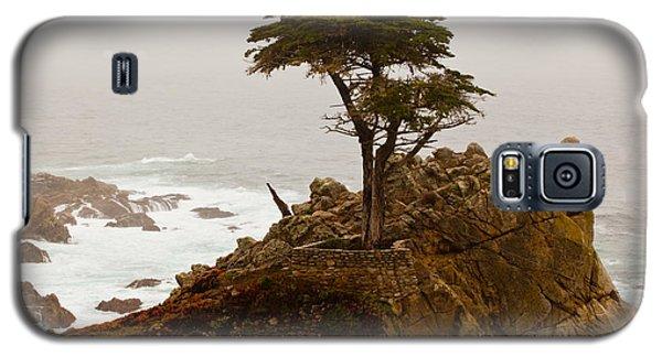 Coastline Cypress Galaxy S5 Case by Melinda Ledsome
