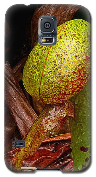 Cobra Lily In Red Galaxy S5 Case