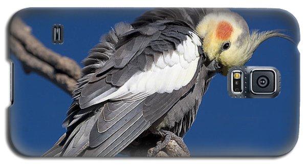 Cockatiel - Canberra - Australia Galaxy S5 Case