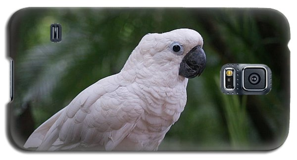 Galaxy S5 Case featuring the photograph Cockatoo by Athala Carole Bruckner