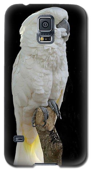 Galaxy S5 Case featuring the photograph Cockatoo Cutie by Myrna Bradshaw