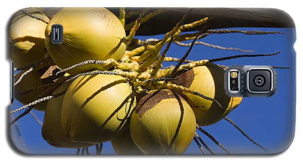 Galaxy S5 Case featuring the photograph Coconut 1 by Teresa Zieba