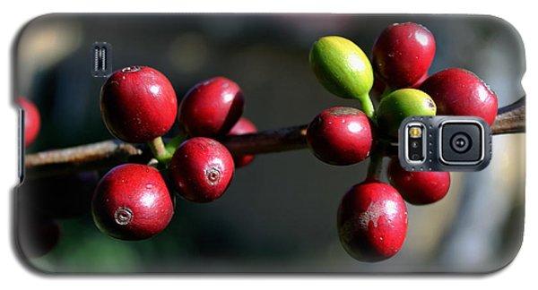 Coffee Beans Galaxy S5 Case by Pamela Walton