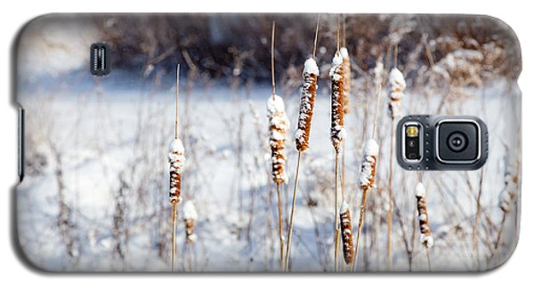 Cold Cattails Galaxy S5 Case