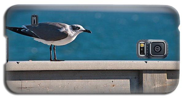 Cold Gull Galaxy S5 Case