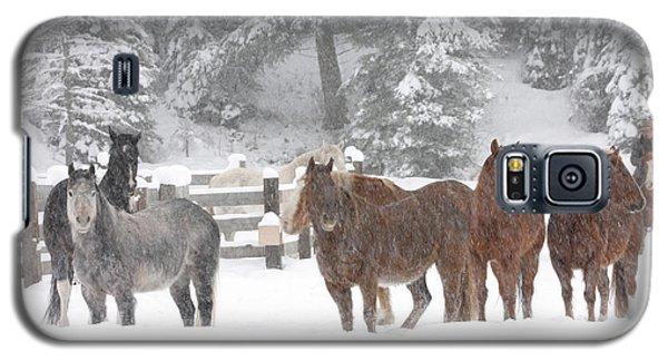 Cold Ponnies Galaxy S5 Case
