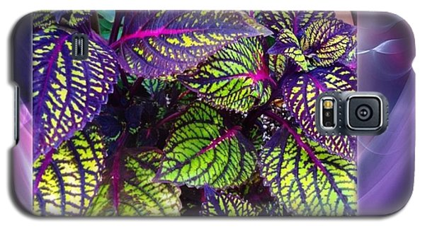 Coleus Abstract Galaxy S5 Case by Becky Lupe