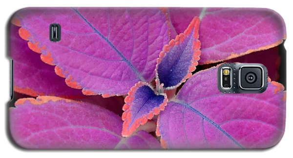 Coleus Galaxy S5 Case