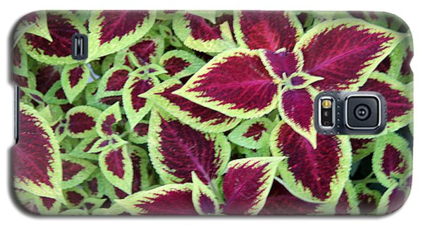 Galaxy S5 Case featuring the photograph Coleus Explosion by Michael Helfen