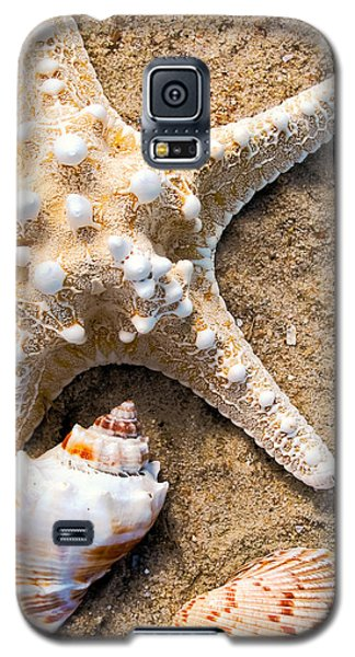 Collecting Shells Galaxy S5 Case by Colleen Kammerer