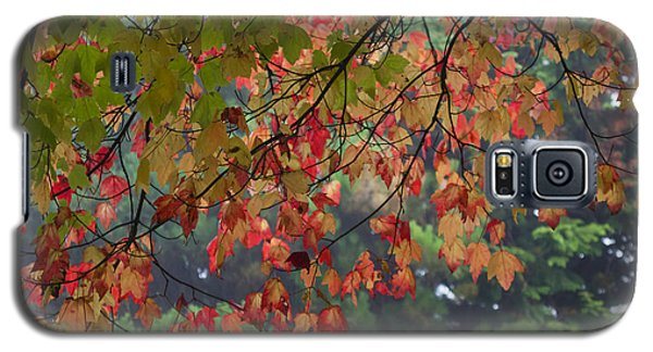 Collection Of Colour In The Morning Fog Galaxy S5 Case