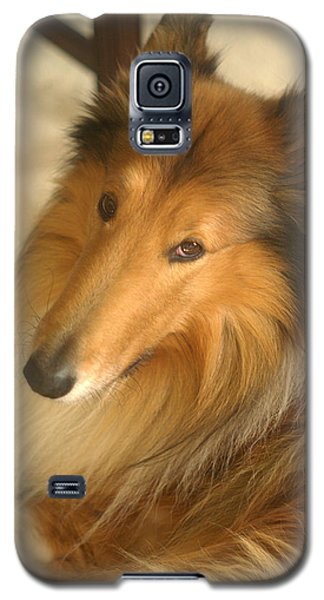 Collie Glamour Shot Galaxy S5 Case by Suzanne Powers