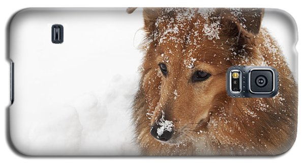 Collie In The Snow Galaxy S5 Case by Jeannette Hunt