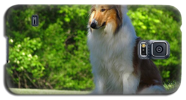 Galaxy S5 Case featuring the photograph Collie Overlook by Deborah Johnson