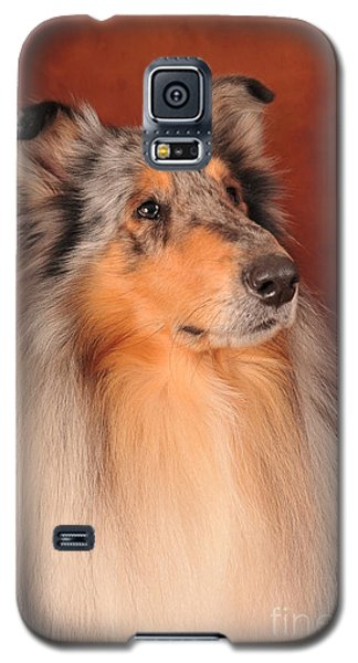 Galaxy S5 Case featuring the photograph Collie Portrait by Randi Grace Nilsberg