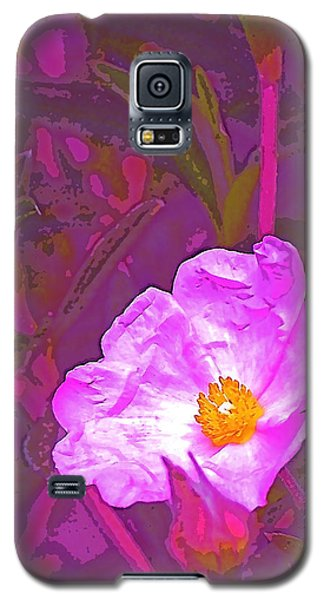 Galaxy S5 Case featuring the photograph Color 2 by Pamela Cooper