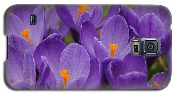 Color It Violet Galaxy S5 Case