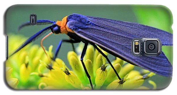 Color Me Blue Galaxy S5 Case