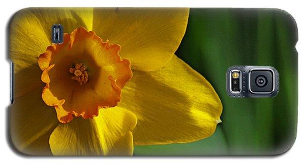Color Of Spring Galaxy S5 Case