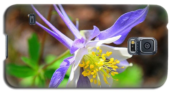 Colorado Blue Columbine Flower Galaxy S5 Case by Marilyn Burton