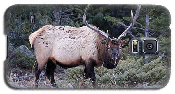 Colorado Bull Elk Galaxy S5 Case