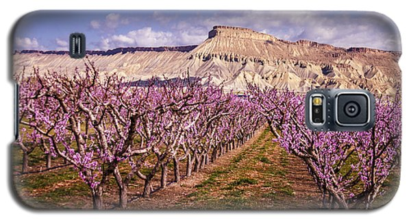 Colorado Orchards In Bloom Galaxy S5 Case