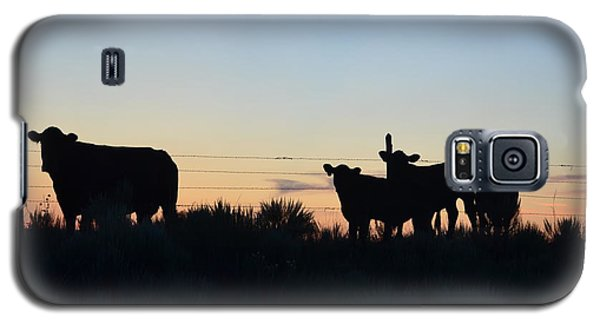 Colorado Cattle Silhouettes Galaxy S5 Case by Clarice  Lakota