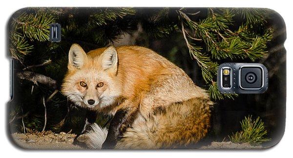 Colorado Red Fox Galaxy S5 Case