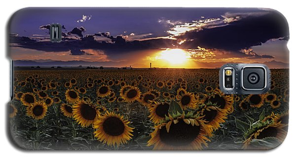 Colorado Sunflowers Galaxy S5 Case