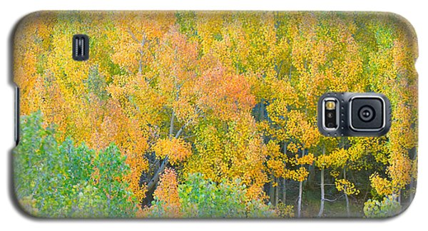 Galaxy S5 Case featuring the photograph Colorful Aspen Forest - Eastern Sierra by Ram Vasudev