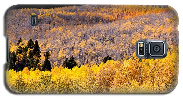Galaxy S5 Case featuring the photograph Colorful Aspen Mixture by The Forests Edge Photography - Diane Sandoval
