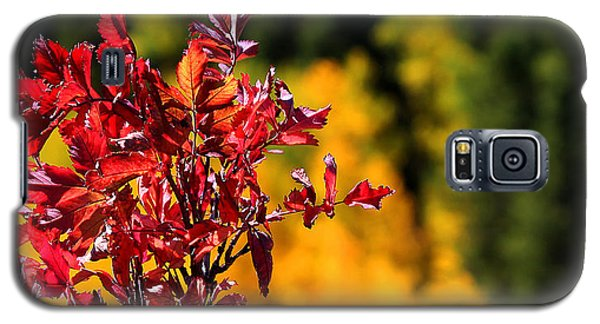 Colorful Colorado Galaxy S5 Case by Silke Brubaker