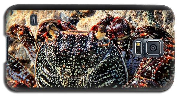 Colorful Crab Galaxy S5 Case