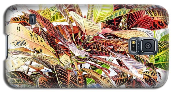 Colorful - Croton - Plant Galaxy S5 Case by D Hackett