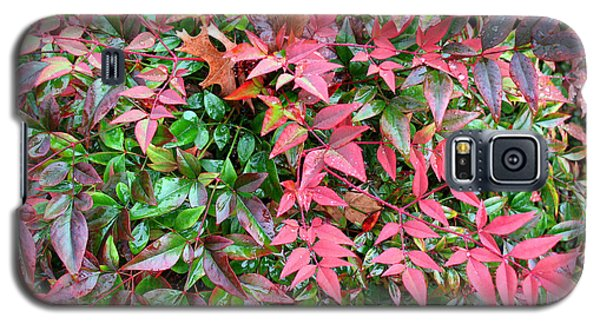 Colorful Nandina Galaxy S5 Case by Connie Fox