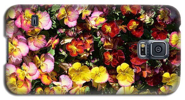 Colorful Pansies Galaxy S5 Case