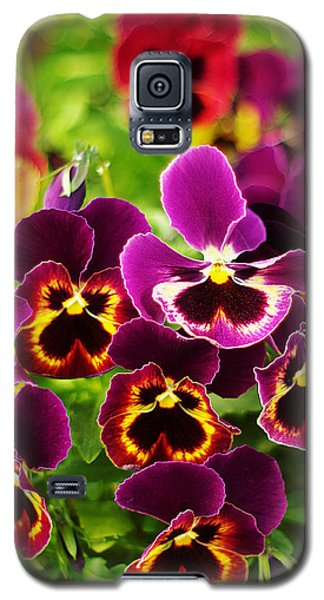 Galaxy S5 Case featuring the photograph Colorful Purple Pansies by Suzanne Powers