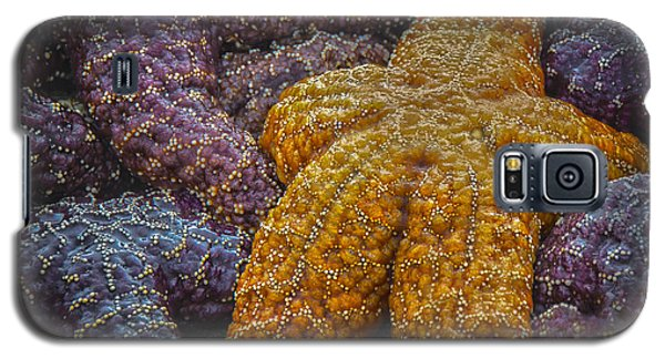 Colorful Starfish Galaxy S5 Case