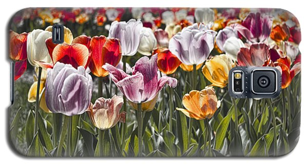 Colorful Tulips In The Sun Galaxy S5 Case