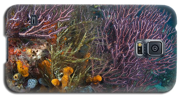 Colors Of Reefs Galaxy S5 Case