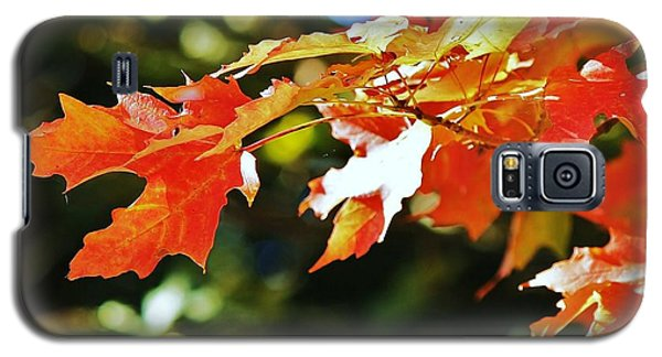 Galaxy S5 Case featuring the photograph Colours Of Fall by Al Fritz