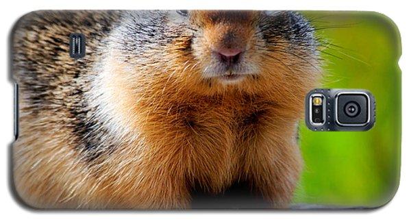 Columbian Ground Squirrel Galaxy S5 Case by Bonnie Fink