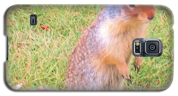 Columbian Ground Squirrel Galaxy S5 Case by Cathy Long