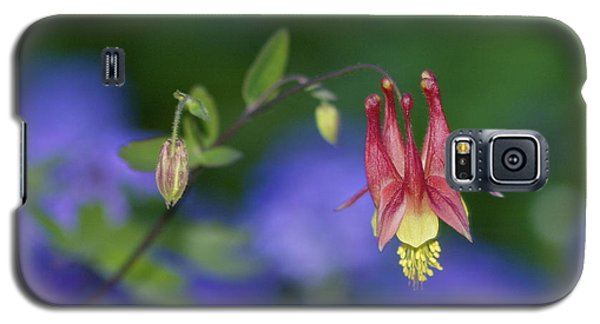 Galaxy S5 Case featuring the photograph Columbine And Verbena by Jane Eleanor Nicholas