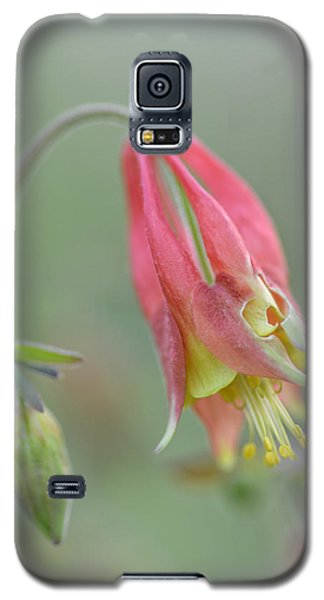 Columbine Softly  Galaxy S5 Case by Debbie Green